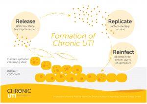 Chronic UTI